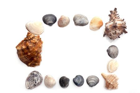 Frame of seashels isolated on white background.