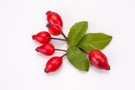 Rose hip isolated on white background. Natural remedy.