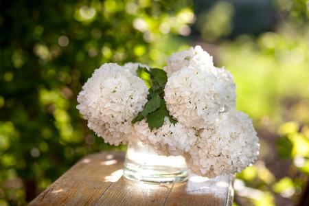 Viburum white flowersIn the glass vase in the garden Stock Photo
