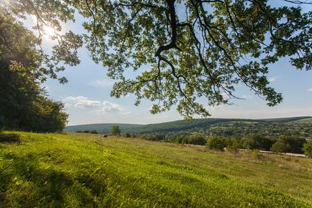 field, big tree, sun and blue sky, summer landscape