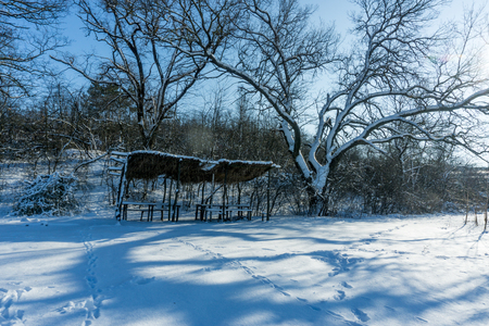 Snow-covered trees in the forest. Forest Park in Winter on a Sunny Day During a Snowfall. Christmas Winter New Year. Hut for hunters.