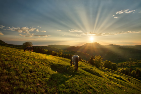 Majestic sunset with two horses grazing on the field in the mountains. Carpatian mountains