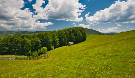 Bergfrühlingstal blüht Landschaft. Frühling in den Karpaten, Rumänien.