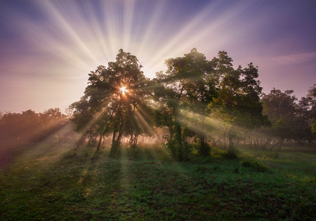 The suns rays penetrate the square of the treetops and illuminate what grows in the forest. Reklamní fotografie