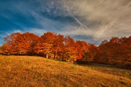 The mountain autumn landscape with colorful forest. Carpatian mountains, transilvania. Stockfoto