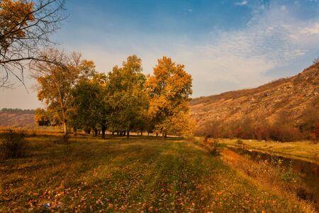 Herbstlandschaft. Gelbes Feld und blauer Himmel.