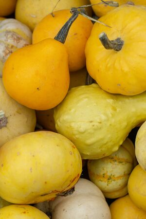 Sweet Dumpling Squash - small stripy very sweet pumpkin with the ridges. Plant based diet, vegetable is very nutritious and has all the vitamins b complex.
