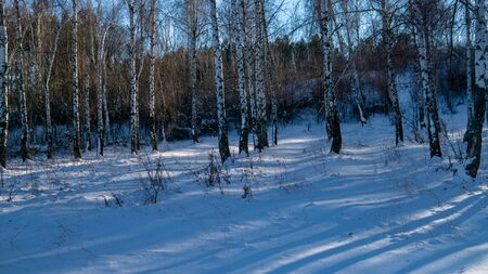 View of beautiful winter birch wood at sunset time Stok Fotoğraf - 132857452