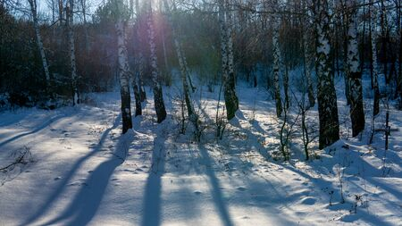 View of beautiful winter birch wood at sunset time Stok Fotoğraf - 133099405