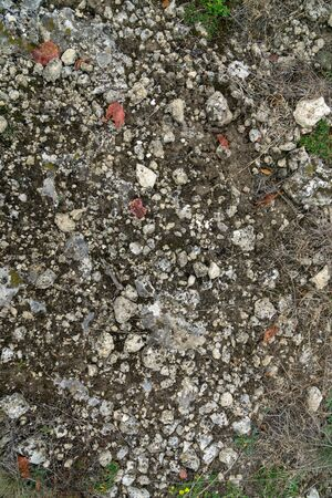 Background texture of a couple weeds growing through gravel stones with moss growing on them Stok Fotoğraf