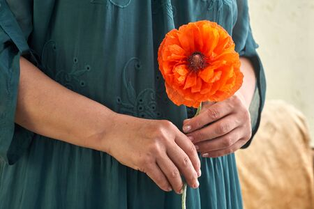 Woman in green dress holding poppe flowers, close up on her hands. Spring time dreams. Foto de archivo
