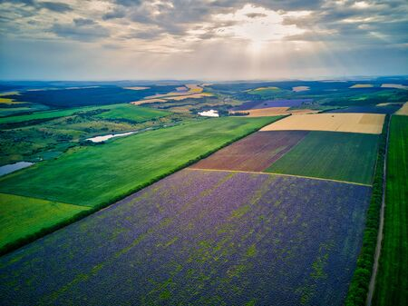 Aerial view of a landscape with lavender field Foto de archivo - 149436491
