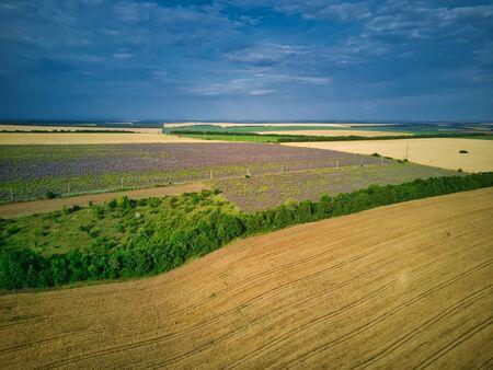 Aerial view of a landscape with lavender field Foto de archivo - 149436508