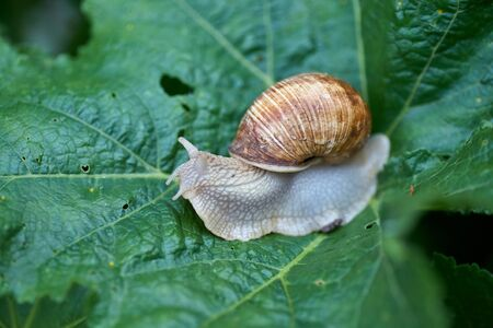 Close up small snail on green leaf in the garden