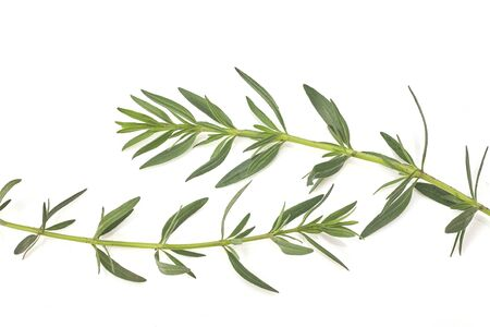 Fresh green rosemary isolated on white, top view. Aromatic herb. Standard-Bild
