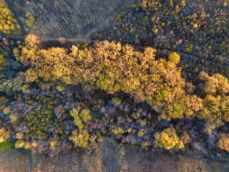 Beautiful bird`s eye view drone landscape image during Autumn Fall of vibrant forest woodland. Autumn forest at sunrise, view from above