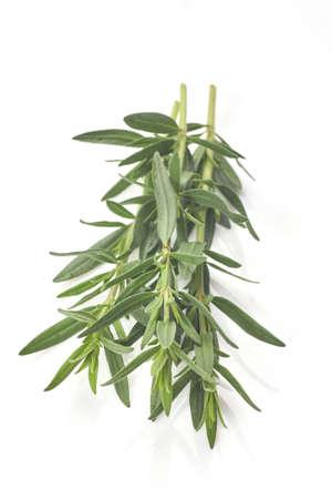 Fresh rosemary isolated on white background. Aromate herb.