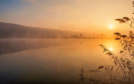 Sunrise over foggy lake. Canes on foreground on the lake coast. Sun is rising up over the trees on the further river bank.