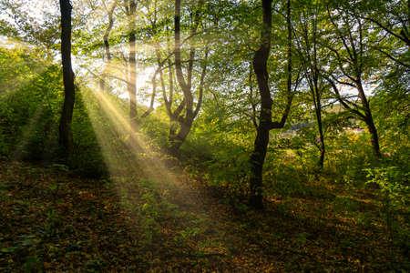 Bright Sun Beams Shining Through Trees. Magestic autumn sunset.