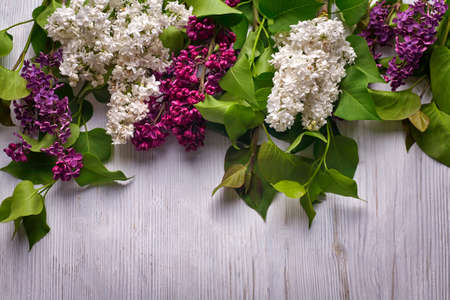 Beautiful purple lilac on wooden white background