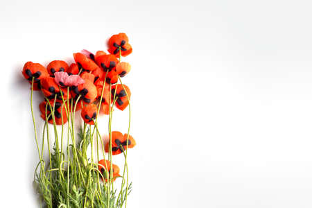 Red Poppy flower on white background. Copy space.