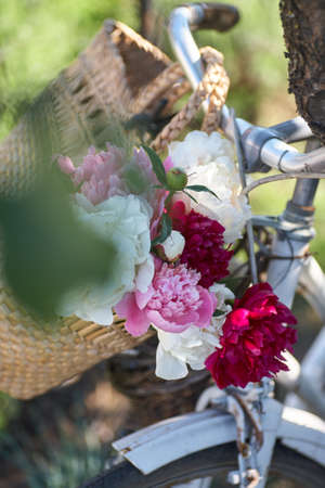 Flowers in a bicycle basket.