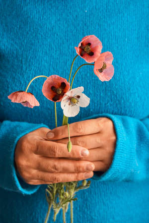 Bouquet of red poppy in the hands of a girl in a blue sweater.
