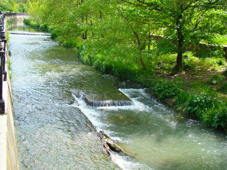 brackish water: River in a park