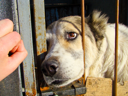 Dogs in dog shelter