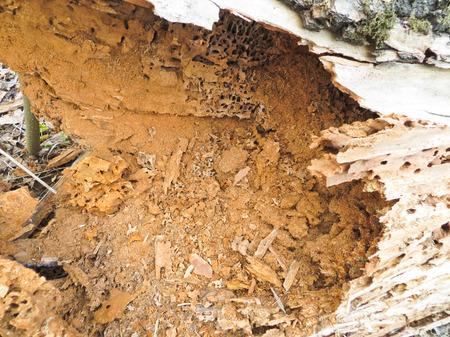 rotting: Rotting trunk
