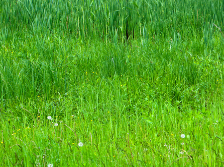 green background: Green grass background