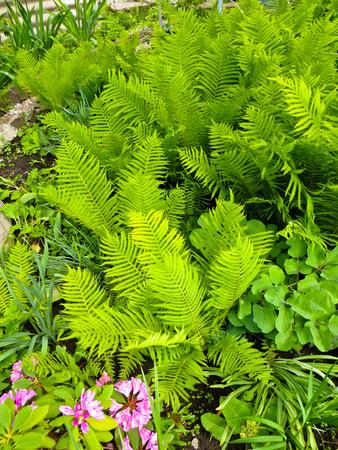 Fern on a flowerbed