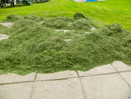 cut the grass: Stack of freshly cut grass in park