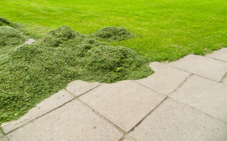 cut grass: Stack of freshly cut grass in park