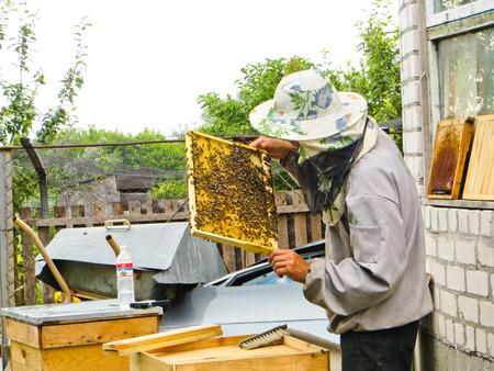 beekeeper: Beekeeper checking honeycombs