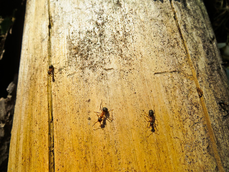 colony: Colony of ants Stock Photo