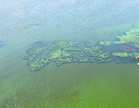 Green algae on a surface of the water Stock Photo