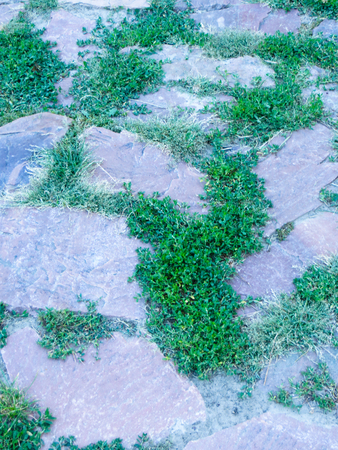 Stone pavement with green grass Stock Photo