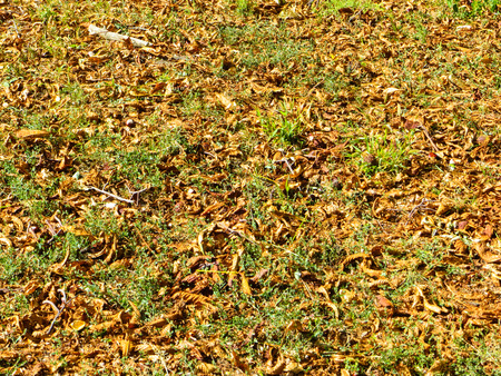 dry leaves: Background with the dry leaves. Autumn, fall Stock Photo