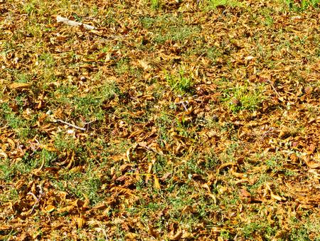 Fondo con las hojas secas. Caída del otoño