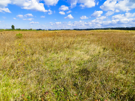 Wide meadow with dry grass on autumn Stock Photo