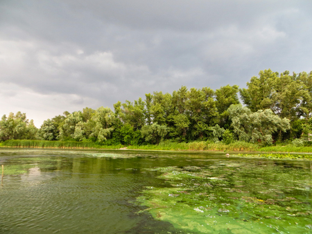 green algae: Green algae pollution on a river Dnieper Stock Photo