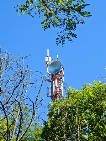 Cell communication tower on summer behind the trees