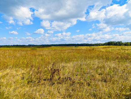 dryed: Wide meadow with dry grass on autumn Stock Photo