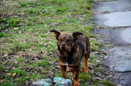 mongrel: Homeless mongrel dog in the city park