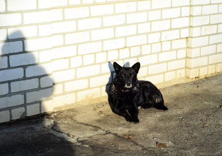 mongrel: Homeless black mongrel dog on a sidewalk Stock Photo