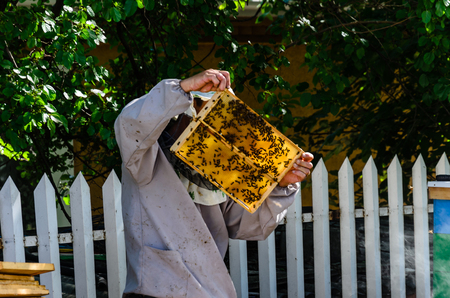 Beekeeper in overall checking the honeycoms on apiary