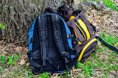haversack: Touristic backpacks under the tree on green grass