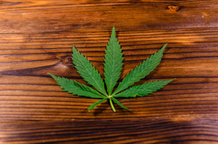legalize: Leaf of the cannabis plant on rustic wooden table. Top view