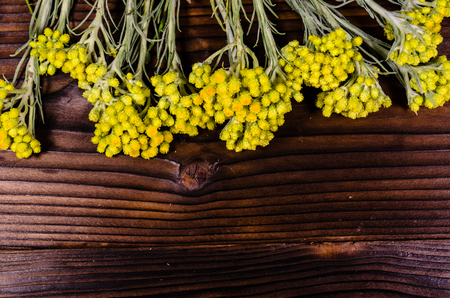 Medicinal plant helichrysum arenarium on rustic wooden table. Top view